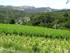 photo de Balades vigneronnes